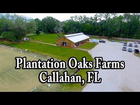 plantation-oaks-farms,-may-2016
