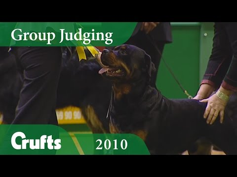 Rottweiler Wins Working Group Judging at Crufts 2010 | Crufts Classics