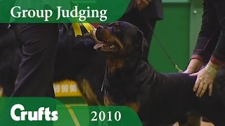 Rottweiler Wins Working Group Judging at Crufts 2010 | Crufts Dog Show