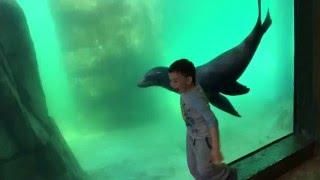 Playful Sea Lion at Turtleback Zoo pt 1