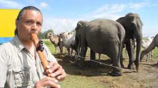 Michael Telapary plays his Flutes for the Elephants