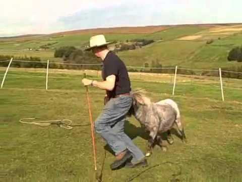 Parelli Natural Horsemanship with a Miniature Horse