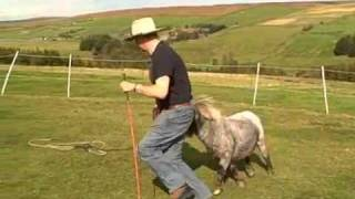 Parelli Natural Horsemanship With A Miniature Horse