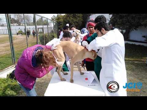 Campagne de vaccination antirabique de la race Sloughi