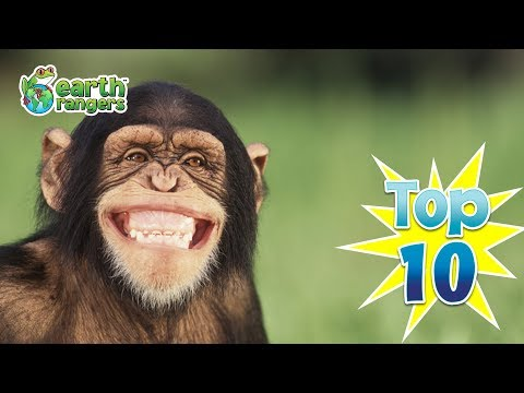 Top 10: Animal Jokes