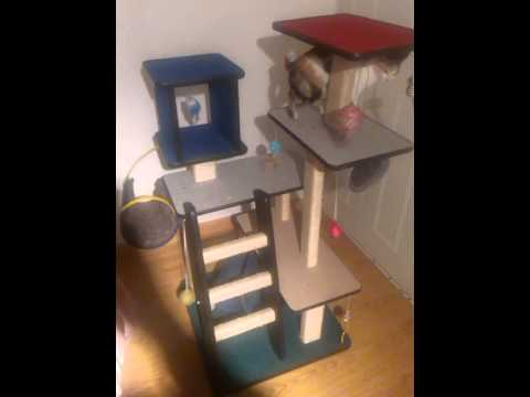 Gimnasios para gatos felinos felices youtube - Fotos de casas para gatos ...