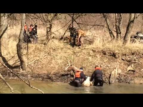 Rescuing Lacy from frigid water in Guernsey Co., Ohio