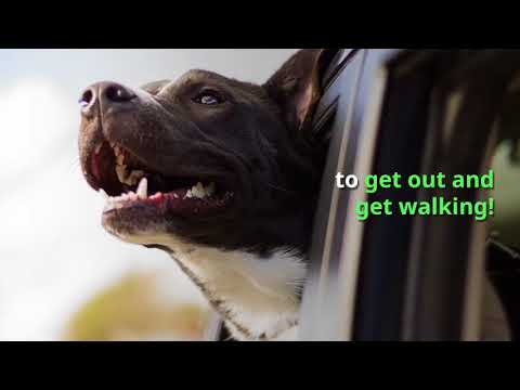 Dan Blackman - Can Dogs improve productivity in the workplace? YES!