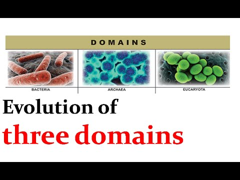 Evolution of three domains of life