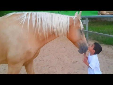 il cavallo e il bambino con musica di a branduardi