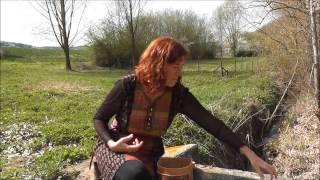 Heilwirkung der Brennnessel und leckere Brennessel Suppe