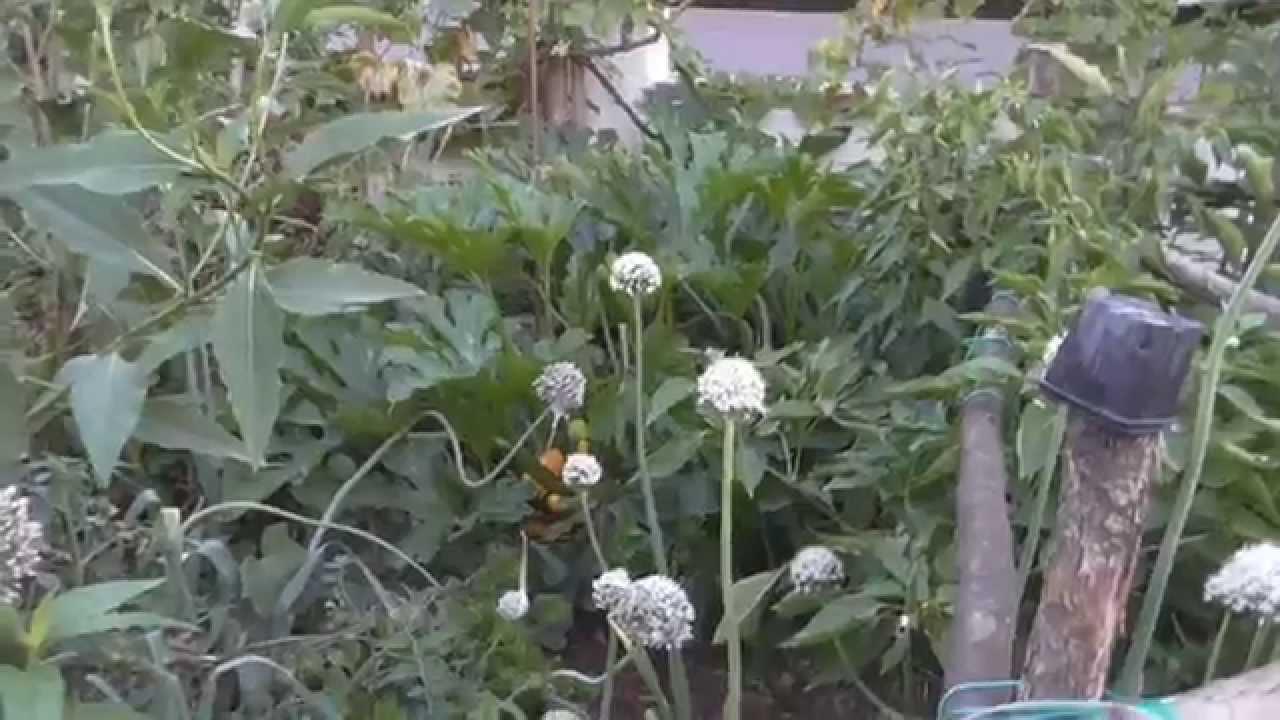 Jardin de lo c 3 permaculture et lectroculture ao t for Jardin permaculture 2015