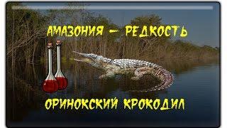 Русская Рыбалка 3.99 Оринокский крокодил (Редкость)