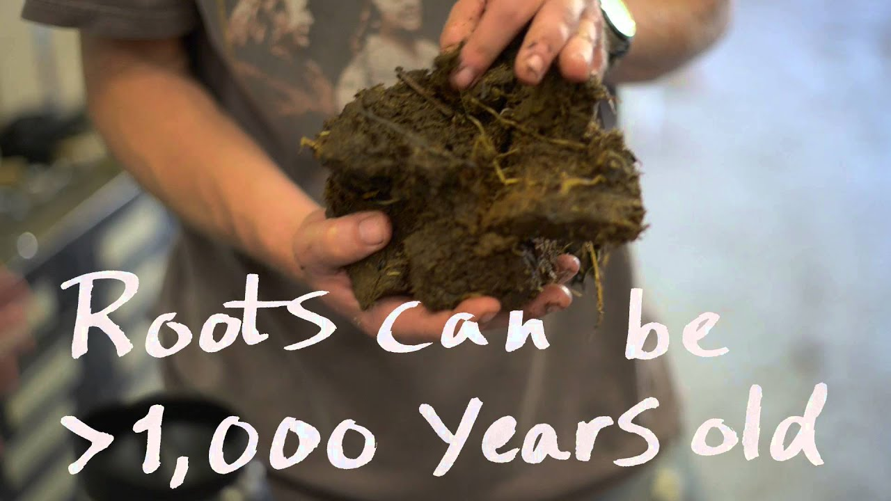 Preview image for Peat Harvest video