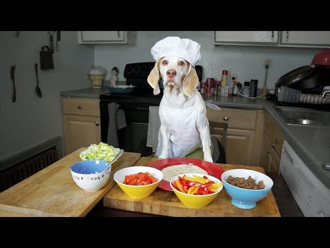 Chef Dog Makes Tacos: Funny Dog Maymo