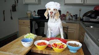 Chef Dog Makes Tacos: Funny Dog Maymo