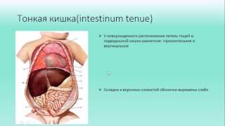 видео Мышечная система человека: строение, особенности, заболевания