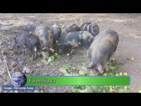 Island Agriculture - Change the World - S01E06