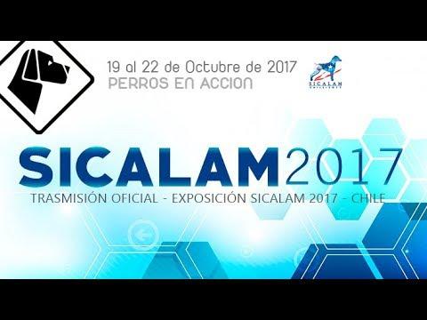 """""""Perros en acción"""" SICALAM Chile 2017 FINALES - Día Viernes"""