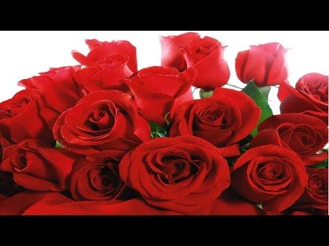 Curso Como Produzir Rosas - Doenças e Insetos