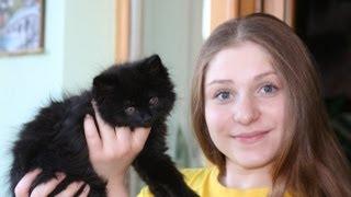VLOG:новая камера, скучающая кошка, покупки...♡