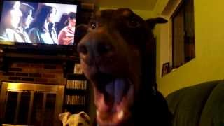 Doberman Pinscher Cries For Pizza