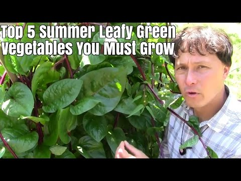 Top 5 Summer Leafy Green Vegetables You Must Grow in Texas & Hot Climates
