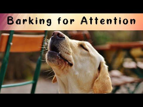 Stopping Attention Seeking Barking