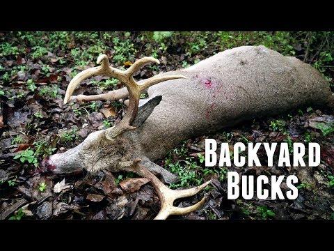 Backyard Bucks In Early October!!!