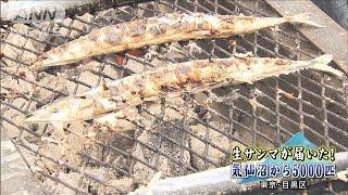 """目黒のさんま祭 """"不漁""""の中・・・5000匹を生で確保(19/09/15)"""
