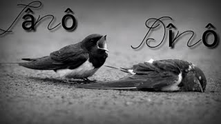 أغنية كردية حزينة على الكل قلب 💔 مليئة بحزن 💔 💔2019 Kurdisch Musik