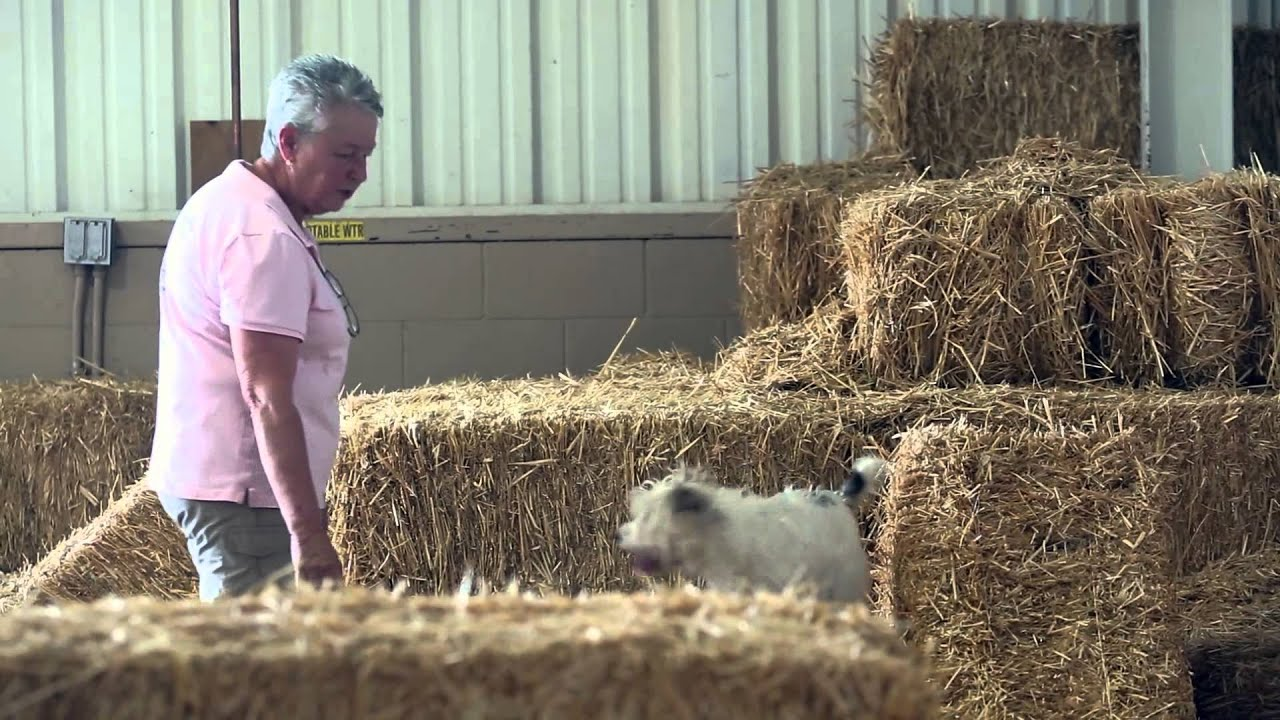 Barn hunt, a competition for all dogs