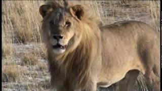 Safari en Afrique australe - Aventure Transkalaharienne
