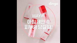 [Dingo X 레드투…