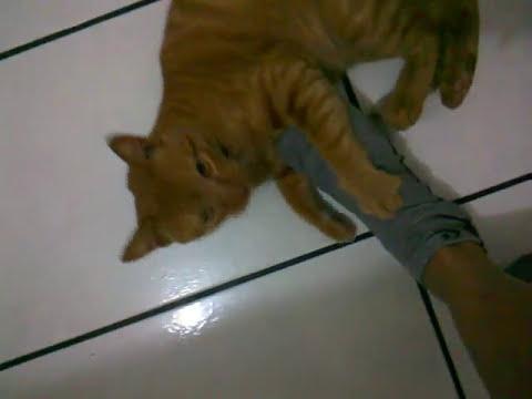 Quer um carinho? quer brincar? adote um gatinho