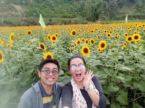 #SweetsTV: SUNFLOWER Farm at Mariano's Blooming Agri--Tourism Park
