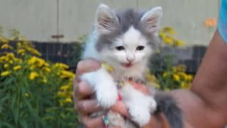 Зайка? Котёнок! Ищу дом!