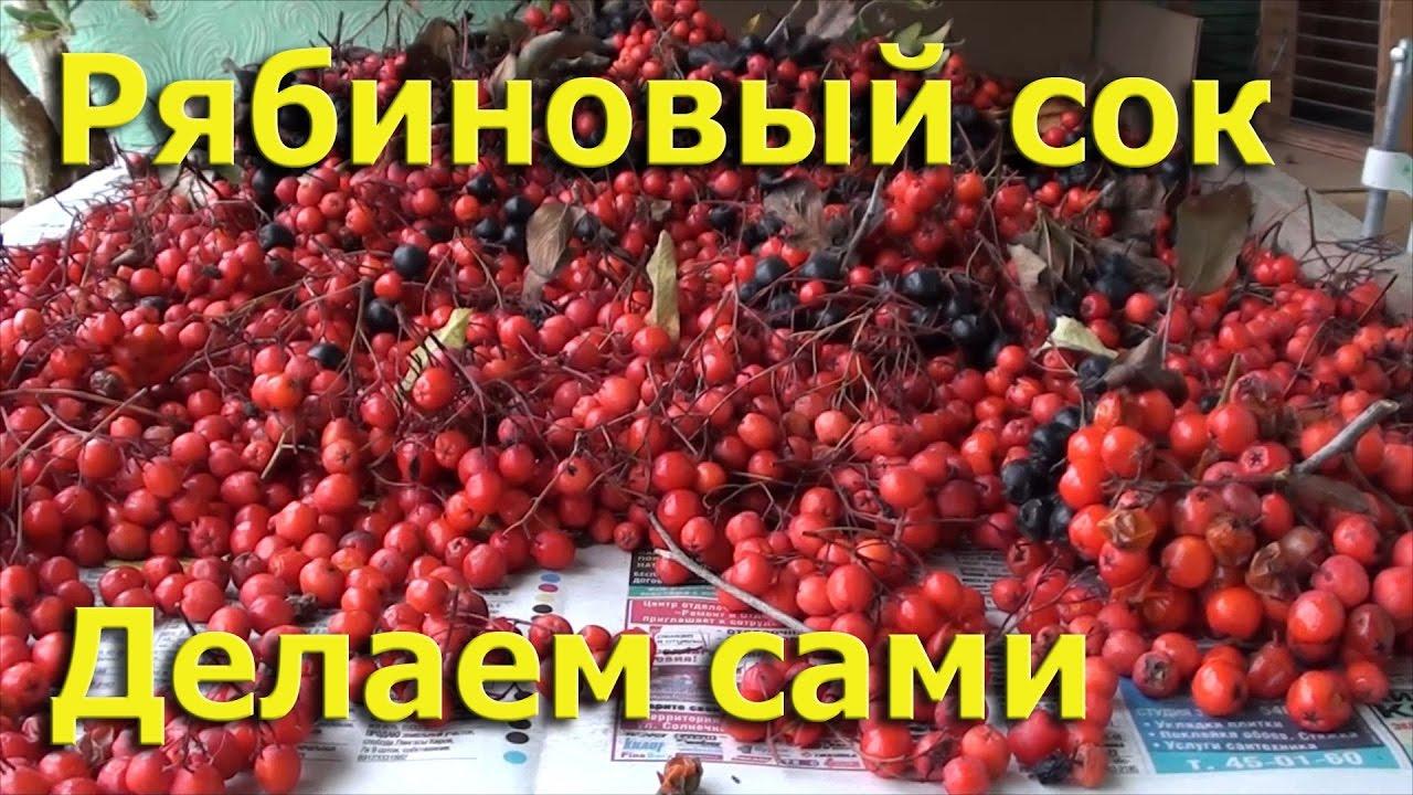Как сделать сок из рябины фото 344
