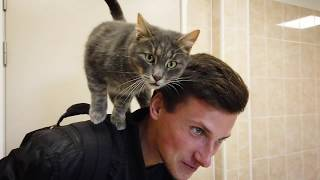 Вольер для котов. Видео снято специально для приюта животных OTRĀ MĀJA Сергеем Геращенко
