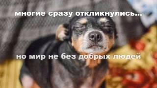 Пропала собака. Осторожно мошенники! С номера МТС Украина +380665702103
