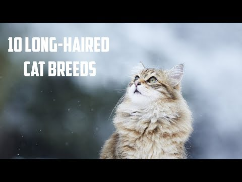 10 Long-Haired Cat Breeds | Animals Unlimited | Sameer Gudhate | Utekar Fisheries Pvt. Ltd.