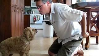 Dog Eats Spaghetti