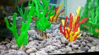 Tập 11: Cách làm nước hồ cá trong và xanh như nước biển