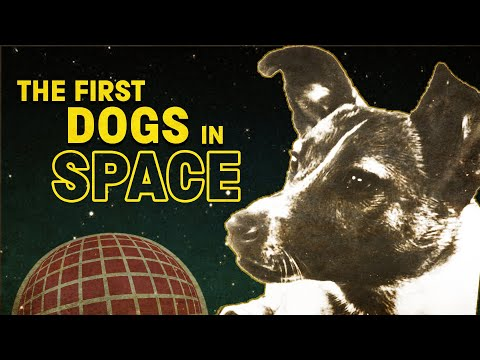 First dogs in space