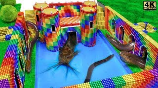Build Underground Castle, Swimming Pool For Catfish and Eel From Magnetic Balls ( Satisfying )