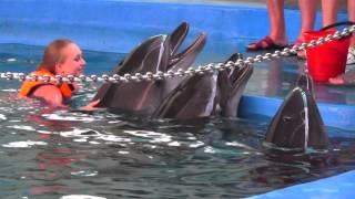 Лазаревское дельфинарий морская звезда июль 2014. Лечение дельфинами.