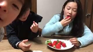 イチゴ 熊本のゆうべに(熊紅) 兄弟で取り合い、Yubeni Strawberry from Kumamoto, race with brother and sister