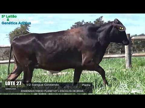 LOTE 27 - REM FATEIRA - REM0273 - 3996-AQ - 5º LEILÃO GIR E GIROLANDO GENÉTICA ADITIVA