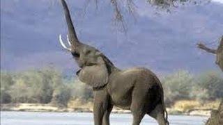 جديد أوضاع الجماع وضع الفيل