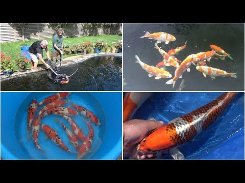 Visit to New Forest Koi - 1st and 2nd September 2019